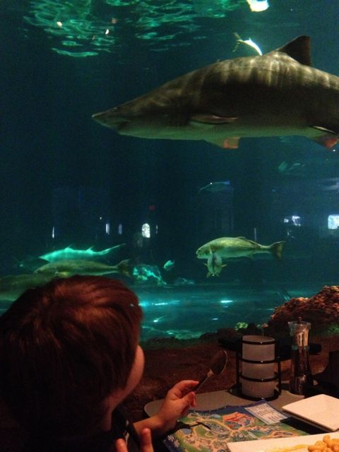 Adam eats with the sharks