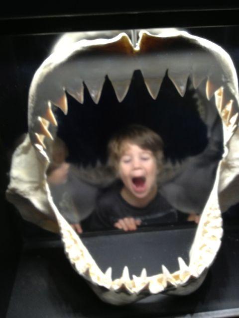 Adam Jaws