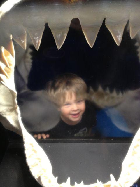 Alex Jaws