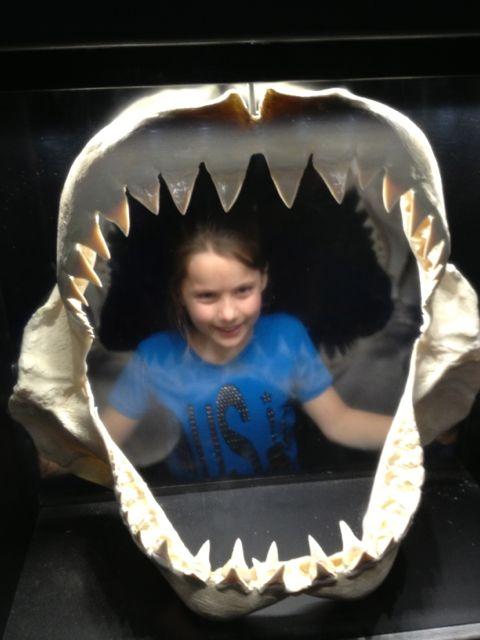 Kameran Jaws
