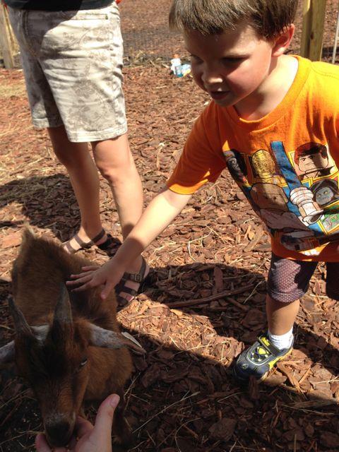 Alex pets the animals