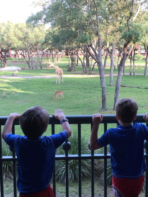Animal Kingdom Lodge View