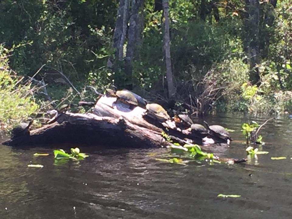 LFive Turtles